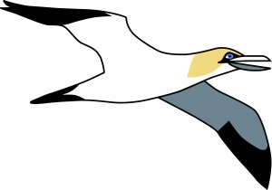 The Blethers Gannet, an icon of East Lothian!