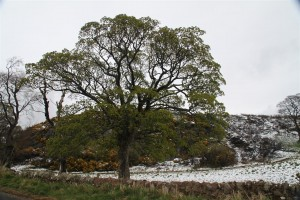 More snow near Haddington East Lothian 3rd April 2012
